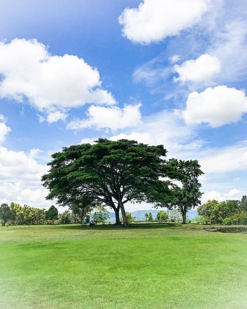 Tree of hope in Eden  #tree #panorama #panoramic #travel #nature #naturephotography #naturfotografie #instagram #instadaily #instagood #insta #clozetteid #travel #travelphotography