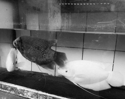 T.G.I.F......#ClozetteID#bnw#blackandwhite#blackandwhitechallenge#blackandwhitephotography #fish#nature#instagood#tgif#weekendvibes#clearwater